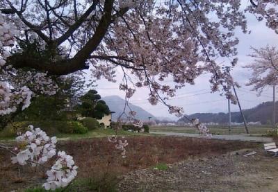 Img_0nagatasakura